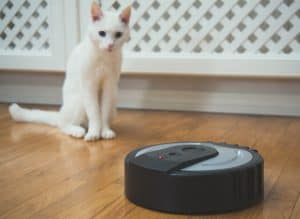 cat sitting looking at a robot vacuum